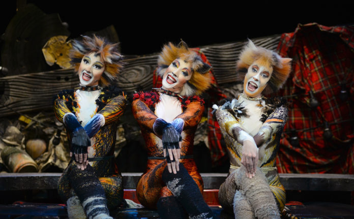 cats-show